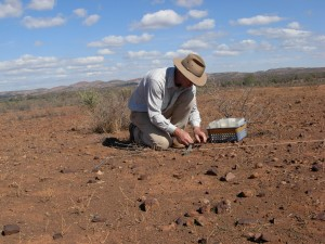 dung transect2